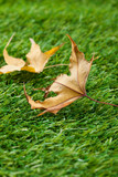 Autumn leaf in a green grass