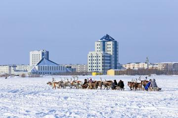 Trip on reindeers