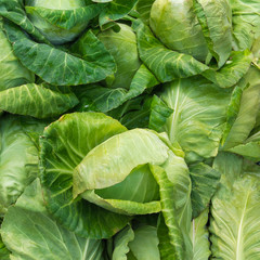 Fresh cabbage in the vegetable market