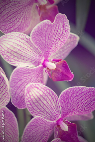 Pink orchid phalaenopsis against tropical greens