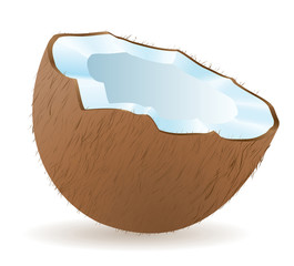 coconut vector illustration