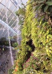 оранжерея в Садах у залива Сингапур