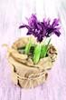Beautiful irises on wooden table