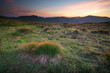 Meadow in mountain