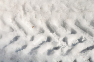 track imprints in the snow