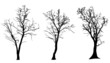 Vector silhouette of tree. - 62606386