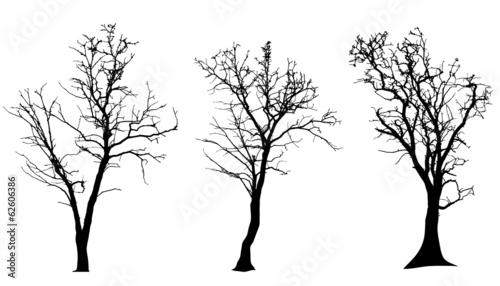 Fototapeta Vector silhouette of tree.