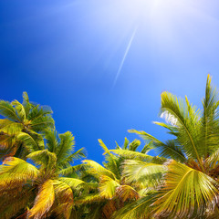 Coconut palm trees, blue sky and sun