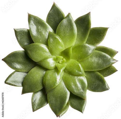 Fotobehang Cactus Kaktus