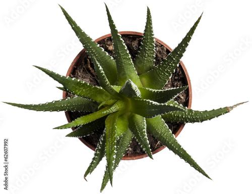 Canvas Cactus Kaktus