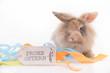 Frohe Ostern mit Wuschel dem Hasen