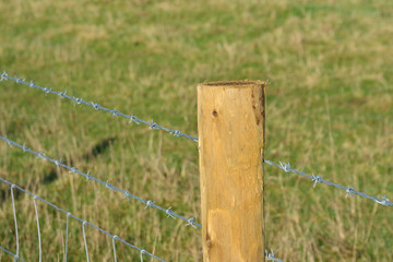 Single barbed wire fence pence