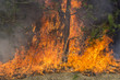 Fire in forest - 62610948