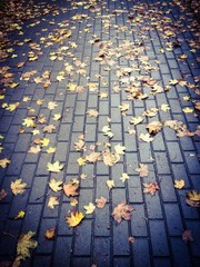 Autumn yellow leaves on sidewalk