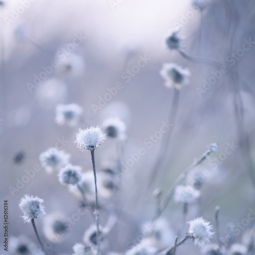 Blue toned wildflowers background