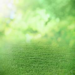 Spring or summer sunny field