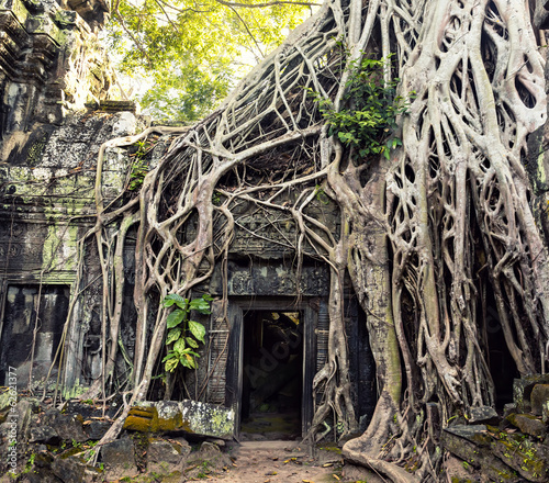 Part of Angkor temple covered with roots