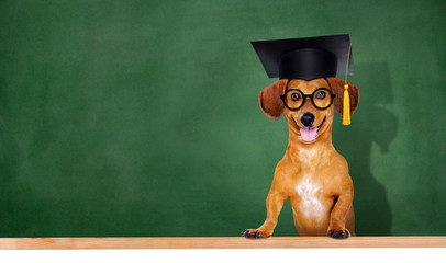 dog wearing mortar board on green board background