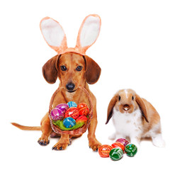 easter dog and  bunny with easter eggs basket
