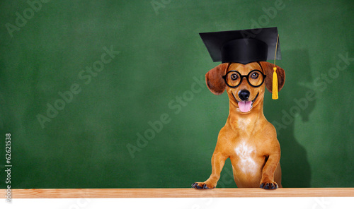 canvas print picture dog wearing mortar board on green board background