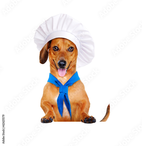 dog chef cook