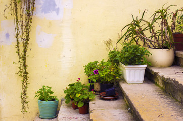 Plants on Stairway