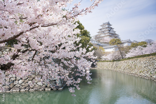 Plexiglas Kersen Japanese cherry blossoms and castle in spring