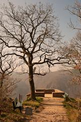 Aussichtspunkt Rittersaal im Niederwald über dem Rhein