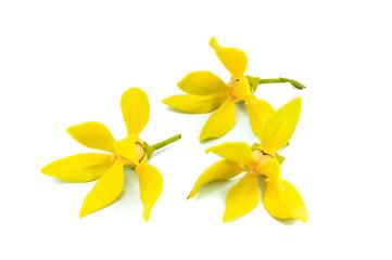 Ylang-Ylang Flower, perfume flower