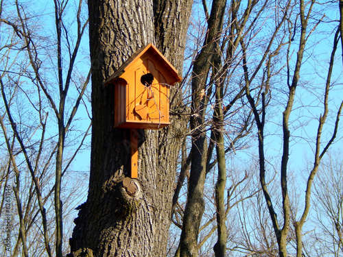Wooden birdhouse feeder for birds hanging on a tree