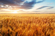 Agriculture industry, Wheat field at sunset