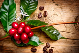 Fototapety Coffee Plant. Red coffee beans on a branch of coffee tree