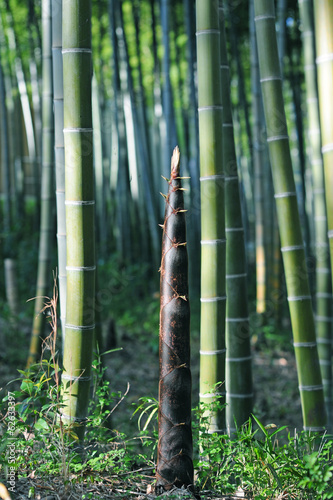 Bamboo shoot-4