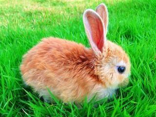 brown rabbit in grass garden