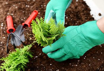 hands put plants