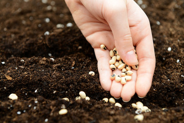 hand planting seeds in the ground