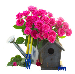pink roses with bird cage
