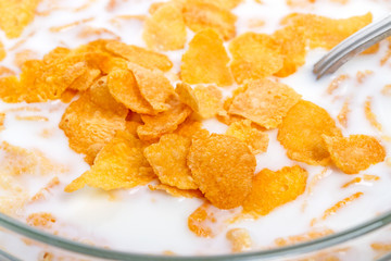 Crispy corn flakes with milk  close-up