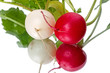 Two radishes and reflection