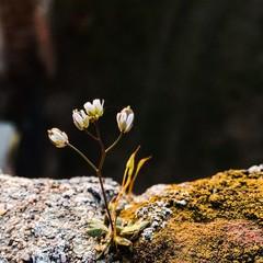 fiore e muschio