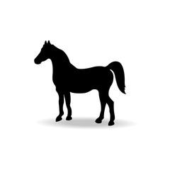 form contour horse