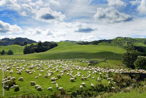 Keuken foto achterwand Nieuw Zeeland Neuseland´s Schafe