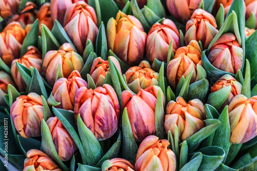 Romantic garden tulips background