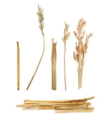 straw isolated on white background for design and construction