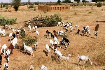 マリ、国境周辺の村