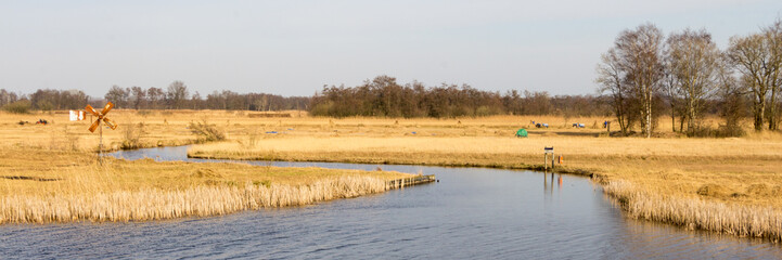 Dutch Landscape of wetland with reed
