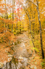 Creek in a Forest and Autumn Colours