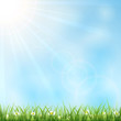 Sunny background with grass
