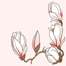 Vecteur tiré par la main des fleurs de magnolia cadre