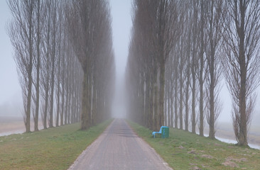 bench and tunnel between trees in fog